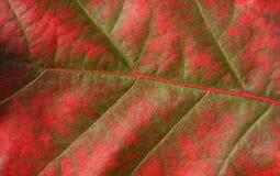 jesienią tło Zdjęcie Stock