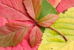 jesienią tło Zdjęcie Royalty Free
