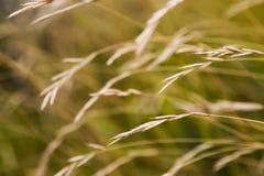 jesienią trawy Obraz Stock