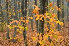 jesienią trawy nawet zielony zostaw pomarańczową cichą widok pogodę Zdjęcie Royalty Free