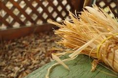jesienią trawy nawet zielony zostaw pomarańczową cichą widok pogodę Zdjęcie Stock