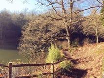 jesienią trawy nawet zielony zostaw pomarańczową cichą widok pogodę Zdjęcia Royalty Free
