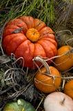 jesienią zbiorów fotografia stock