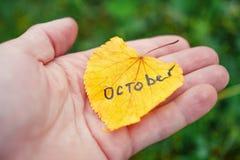 jesienią zbliżenie kolor tła ivy pomarańczową czerwień liści Żółty liść w ręce z wpisowym Październikiem Zdjęcie Stock