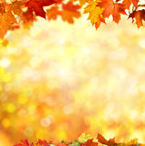 jesienią zbliżenie kolor tła ivy pomarańczową czerwień liści Zdjęcie Royalty Free