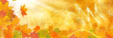 jesienią zbliżenie kolor tła ivy pomarańczową czerwień liści Obrazy Royalty Free