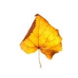 jesienią, zostaw białe tło Obraz Stock