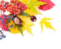 jesienią, zostaw białe tło Zdjęcia Stock