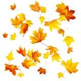 jesienią, zostaw upadek klonów Canada Zdjęcia Royalty Free