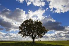 3 jesienią zrobić zdjęcie panoramiczna przyprawił natury Obraz Royalty Free