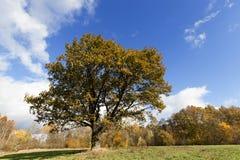 3 jesienią zrobić zdjęcie panoramiczna przyprawił natury Fotografia Royalty Free