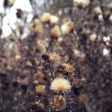 Jesieni łąka obrazy stock