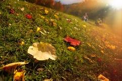 Jesieni łąka i spadać liście Fotografia Royalty Free
