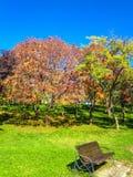 Jesieni ławka i park Fotografia Royalty Free