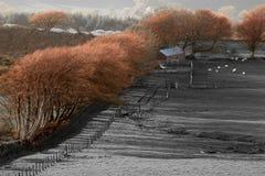 Jesieni łuna Obraz Stock