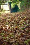 Jesieni ścieżka Obrazy Royalty Free