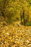 Jesieni ścieżka Obraz Royalty Free