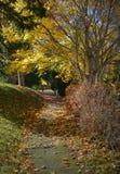 Jesieni ścieżka Zdjęcia Stock