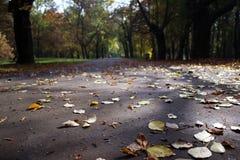 Jesieni ścieżka w parku Zdjęcia Stock