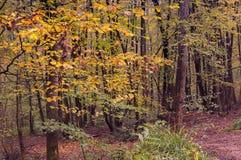 Jesieni światła Fotografia Royalty Free