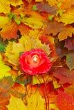 Jesieni światło Zdjęcie Royalty Free