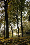 Jesieni światło Fotografia Stock