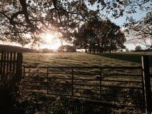 Jesieni światło Obrazy Royalty Free
