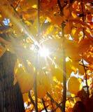 Jesieni światło słoneczne Fotografia Royalty Free