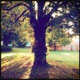 Jesieni światło słoneczne przez drzewa Obrazy Royalty Free