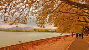 Jesieni żółci drzewa w jeziorze Fotografia Royalty Free