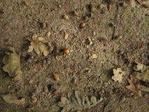 Jesieni żniwa, acorns i liście, zdjęcia royalty free