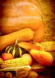 Jesieni żniwo Zdjęcie Stock