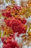 Jesieni żniwo Fotografia Royalty Free