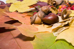 jesieni życie wciąż Zdjęcia Royalty Free
