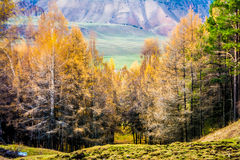 3 jesieni Fotografia Stock