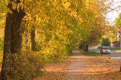 Jesieni alei drzewa Zdjęcia Stock