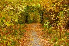 Jesieni aleja Zdjęcie Royalty Free