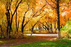 Jesieni aleja Zdjęcie Stock