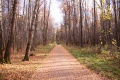 Jesieni aleja w miasto parku, trawie i liściu, smutny nastrój, samotność, ławki obrazy stock