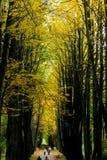 Jesieni aleja w ogródzie botanicznym Obraz Royalty Free