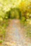 Jesieni aleja w ostrości bokeh Obraz Stock