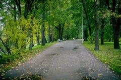 Jesieni aleja w parku obrazy royalty free