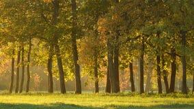 Jesieni aleja w Sigulda Zdjęcia Royalty Free