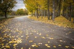 Jesieni asfaltowa droga z spadać żółtymi liśćmi Obrazy Royalty Free