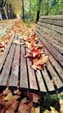 Jesieni ławka Zdjęcia Royalty Free