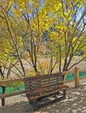 Jesieni ławka w Jiuzhaigou i drzewo Zdjęcia Stock