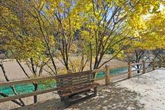 Jesieni ławka w Jiuzhaigou i drzewo Obraz Stock