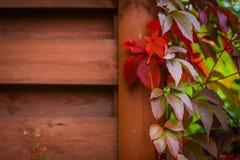 Jesieni backgroung Zdjęcie Royalty Free