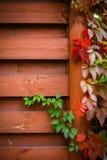 Jesieni backgroung Zdjęcie Stock