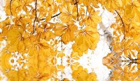 jesienią backround Fotografia Royalty Free